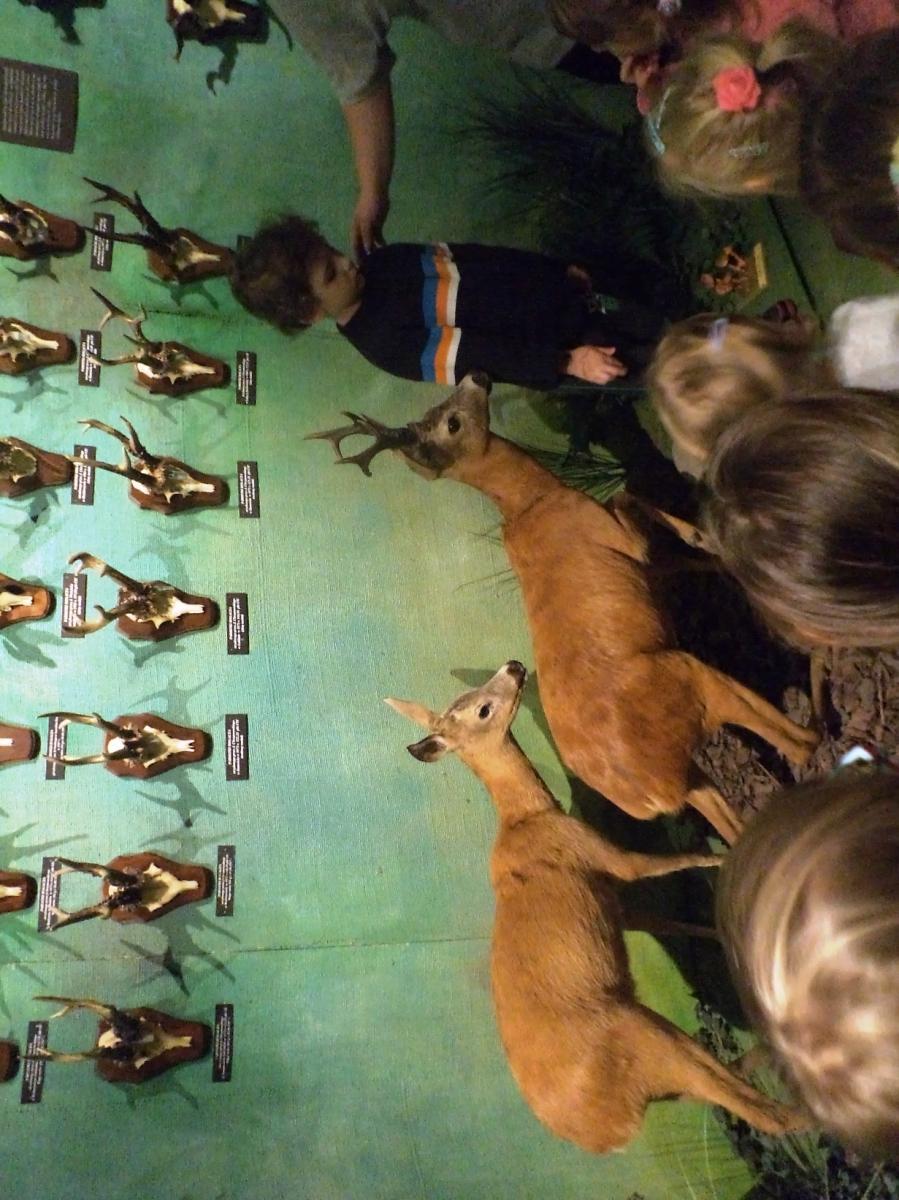 łazienki Królewskie I Muzeum łowiectwa Wycieczka Domek