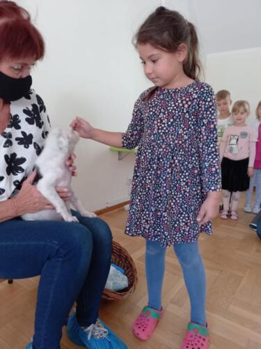 Przytul psa (16)