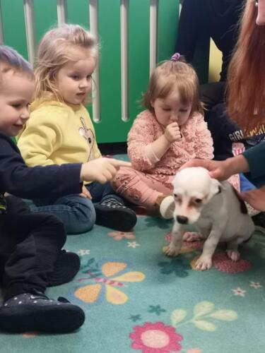 Przytul psa (3)