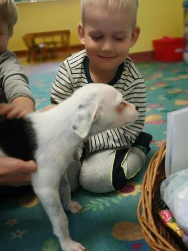 Przytul psa (6)